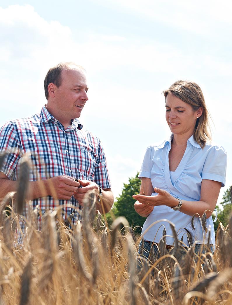 Landwird auf dem Feld bei Getreidekontrolle