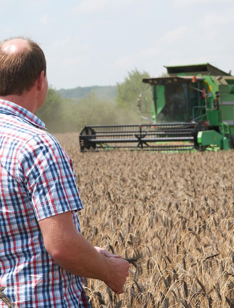 Landwirt auf Emmerfeld mit Mähdrescher